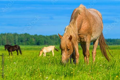 Fotobehang Paarden Horses graze in a field