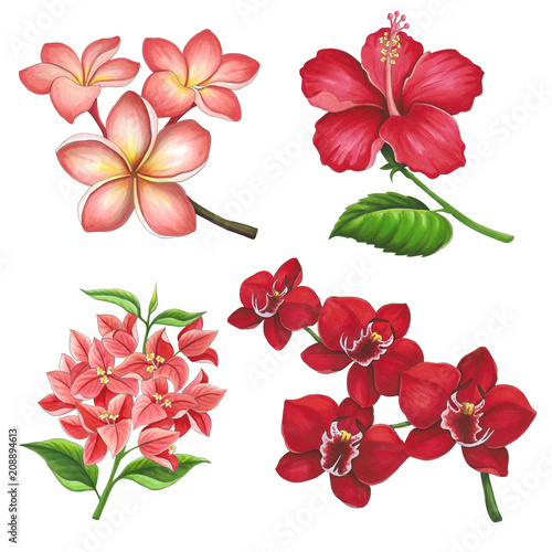 Beautiful tropical flowers on a white background. Sketch done in alcohol markers - 208894613