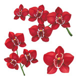 Red orchid flowers on a white background. Sketch done in alcohol markers