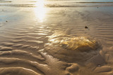 The Jellyfish on the beach in morning sunshine time.Thailand. - 208896680