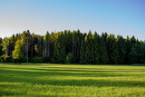 Coniferous forest and green agricultural field