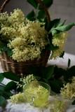 Elderflower tea. style vintage. - 208906466