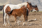 Wild Horse Mare and Foal - 208933439