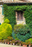 plants in a rustic courtyard - 208947840
