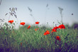 beautiful summer meadow with poppies and chamomile, can be used as background  - 208948230