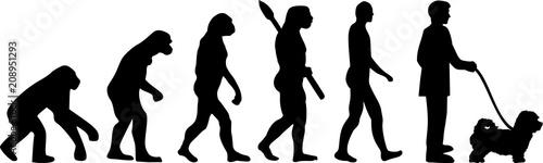 Maltipoo evolution
