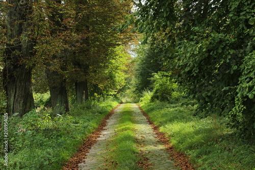 Fotobehang Weg in bos Droga