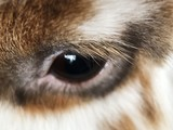 Fluffy brown rabbit with white close up  - 208959250