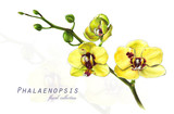 Botanical illustration. Postcard card with blossoming yellow orchid phalaenopsis flower. Imitation of watercolor. Drawing with alcohol markers. - 208960857