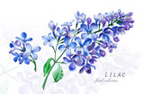 Botanical illustration. Postcard card with blossoming blue lilac flower. Imitation of watercolor. Drawing with alcohol markers. - 208960884