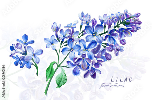 Botanical illustration. Postcard card with blossoming blue lilac flower. Imitation of watercolor. Drawing with alcohol markers.