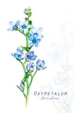 Botanical illustration. Postcard card with blossoming blue oxypetalum flower. Imitation of watercolor. Drawing with alcohol markers. - 208961016