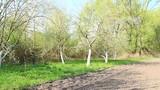 Soil on vegetable garden before planting in village. Apple garden behind vegetable garden - 208972615