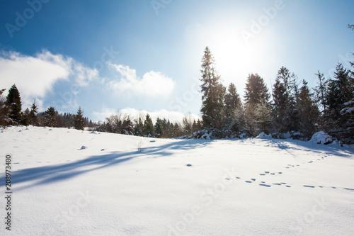 Foto Murales Nice-looking winter day