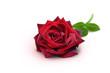 Blumen 933