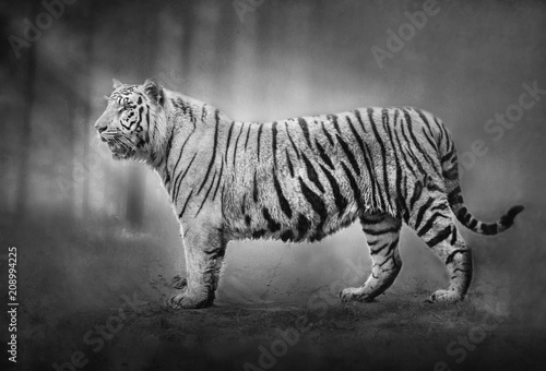 Aluminium Panter White Tiger