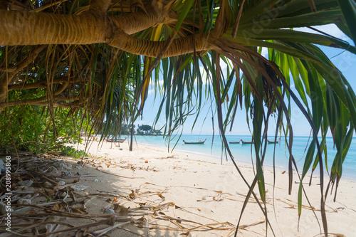 Fotobehang Tropical strand Wild