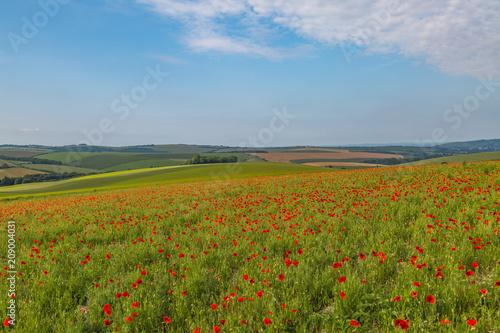 Fotobehang Klaprozen A Poppy Field in Sussex