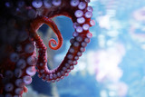 close up on live octopus in the aquarium - 209007646