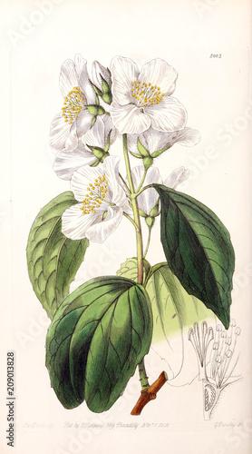 Illustration of plant - 209013828