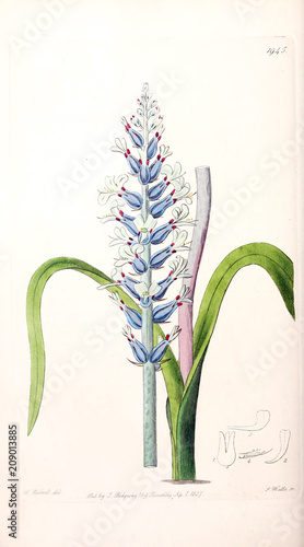 Illustration of plant - 209013885