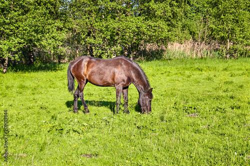 Beautiful horse outdoor