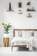 Bright, botanic bedroom interior with wooden furniture, cozy sheets and pillows and natural plants on a white wall