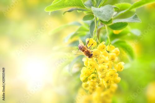 Fotobehang Bee Bee and yellow flower