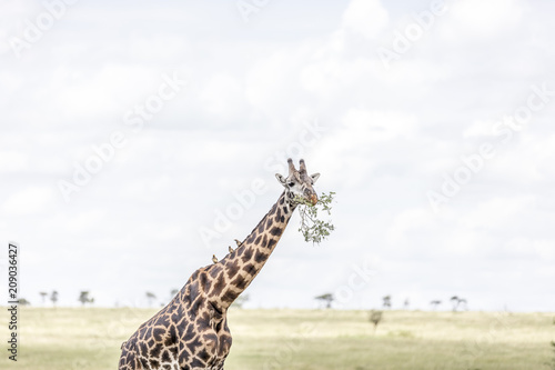 Poster Serengeti National Park