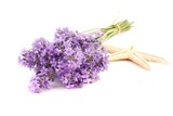 Lavender flowers isolated on white background. - 209037600