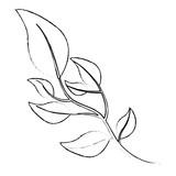 olive branch natural botanical image vector illustration sketch - 209039857