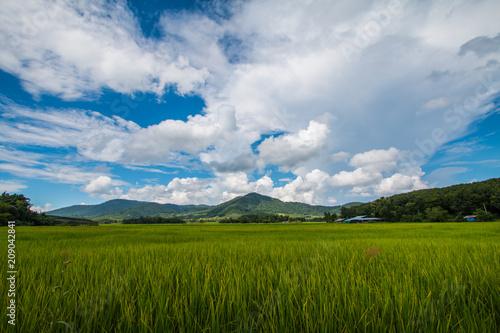 Fotobehang Zomer nature and environment