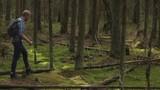 man traveler walking through the wild forest - 209047660
