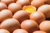 Chicken eggs and egg yolk in a row. - 209048482