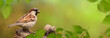 Leinwanddruck Bild - Vögel 83