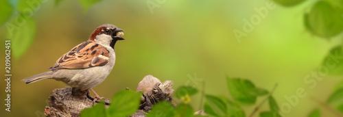 Leinwanddruck Bild Vögel 83