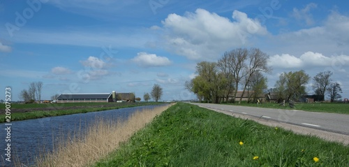 Współczesny Holender daleko. Holandia. Kanał i droga. Cowstable. Bydło