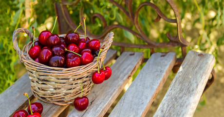 Basket full of ripe red cherries stands on the bench
