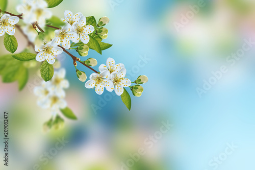 Blossoming branch apple. - 209082477