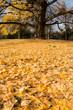 fall leaves in autumn season