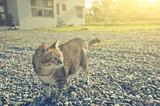 domestic cat walk - 209087466