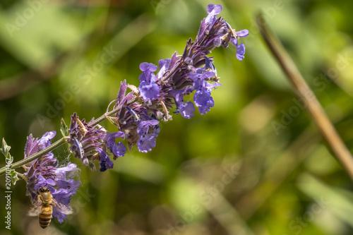 Fotobehang Lavendel Nature