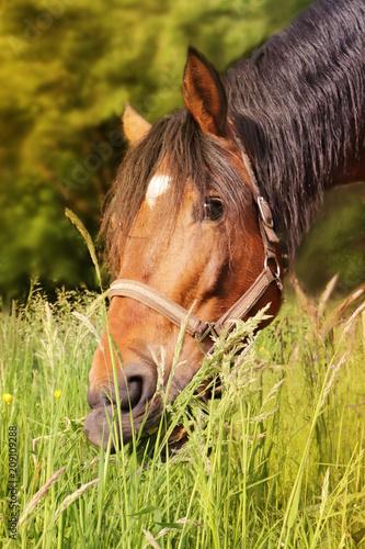 Fotobehang Paarden Horse in grass