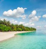 Tropical island beach Palm trees Blue sky