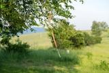 Ribbons on the tree. Slovakia