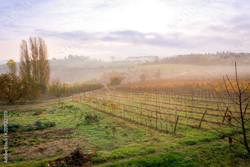 Canvas Toscane tuscan vineyard