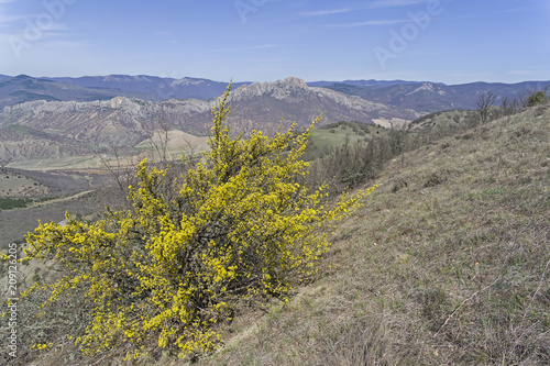 Fotobehang Lente Blossoming dogwood in the Crimean mountains.