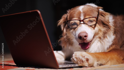 Serious dog-businessman working with a laptop. Funny animals concept