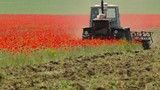 the tractor mows the wild poppy - 209171243