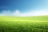 Fototapeta Natura - field of spring grass (shallow DOF) © Iakov Kalinin